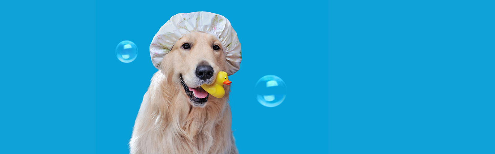 The Importance Of Dog Grooming